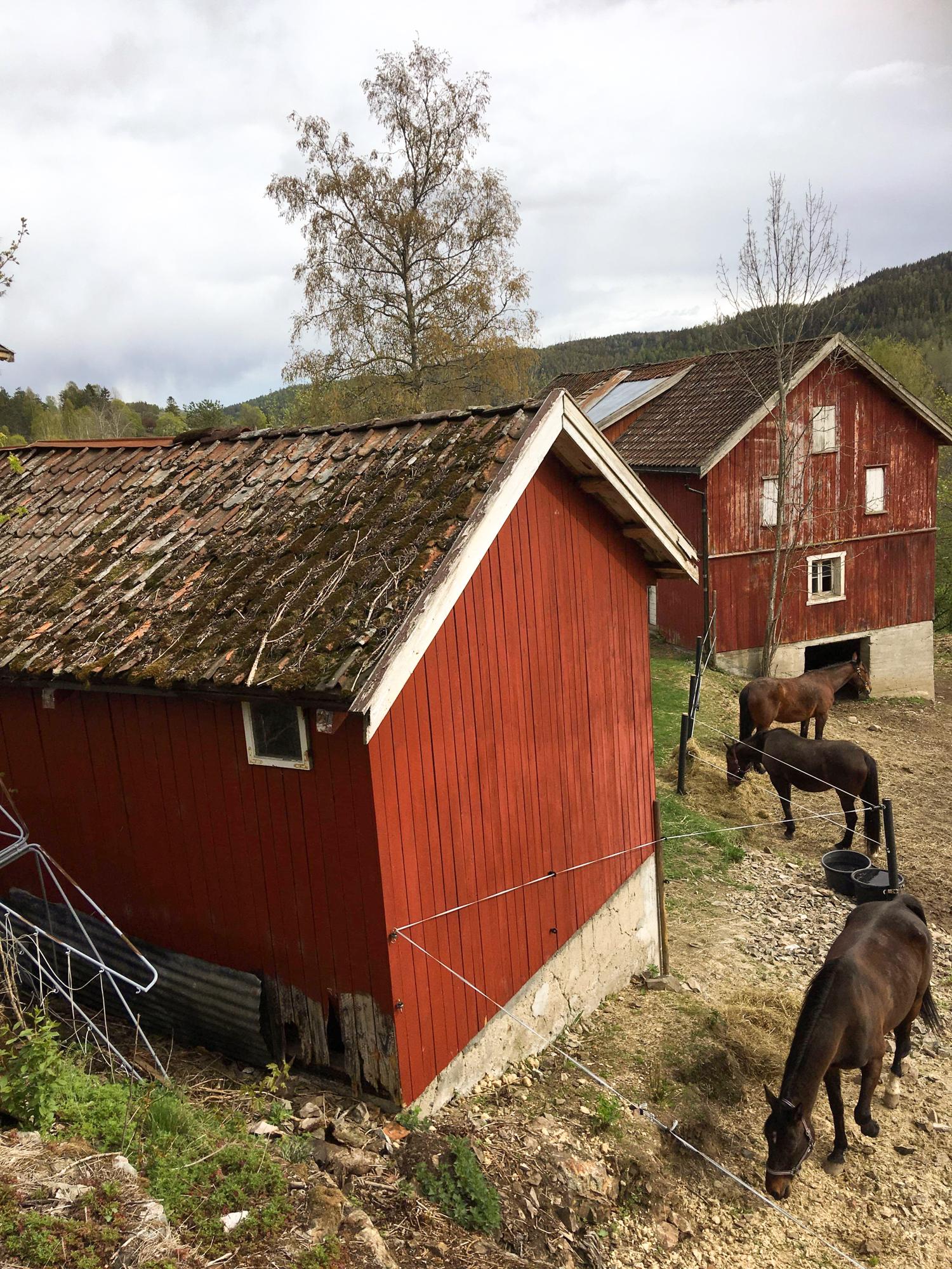 Hester på Heltberg skolegård. Foto.